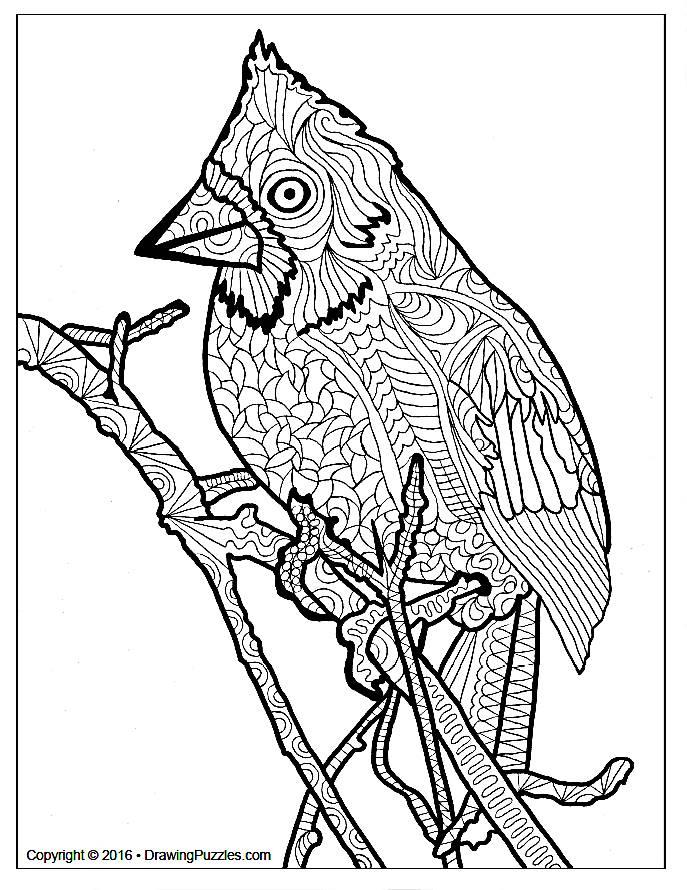 bird-1-cover-photo