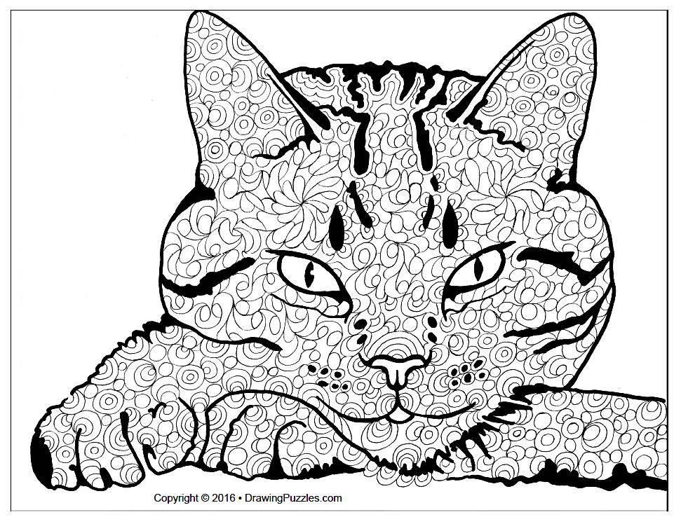 cat-1-cover-photo